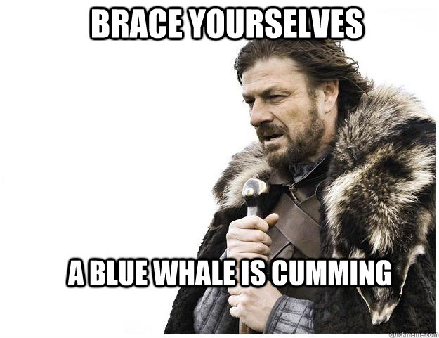 brace yourselves a blue whale is cumming - Imminent Ned