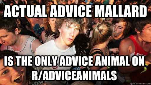 actual advice mallard is the only advice animal on radvicea - Sudden Clarity Clarence