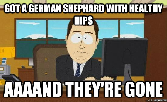 got a german shephard with healthy hips aaaand theyre gone - aaaand its gone