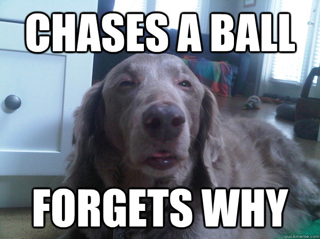 chases a ball forgets why - 10 Dog