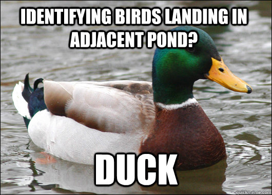 identifying birds landing in adjacent pond duck - Actual Advice Mallard