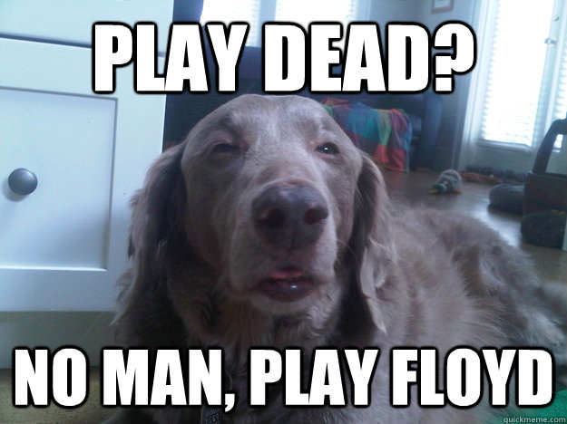 play dead no man play floyd - 10 Dog