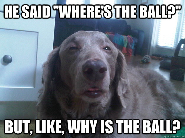 he said wheres the ball but like why is the ball - 10 Dog