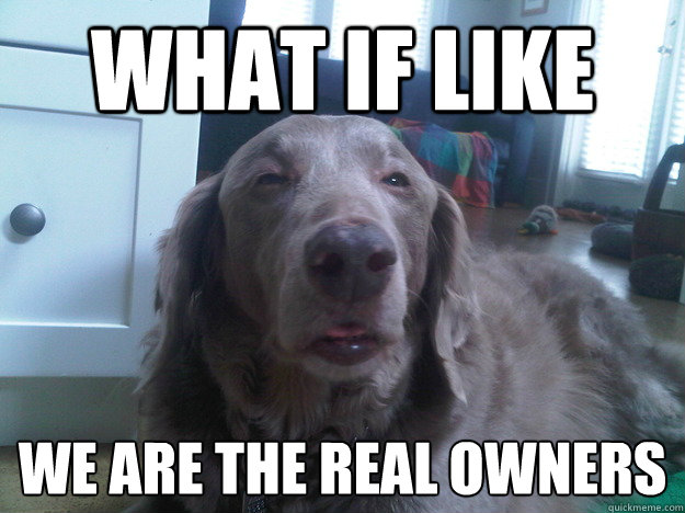what if like we are the real owners  - 10 Dog
