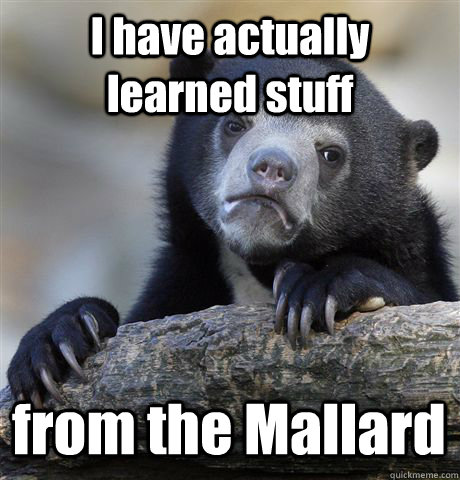 i have actually learned stuff from the mallard - Confession Bear