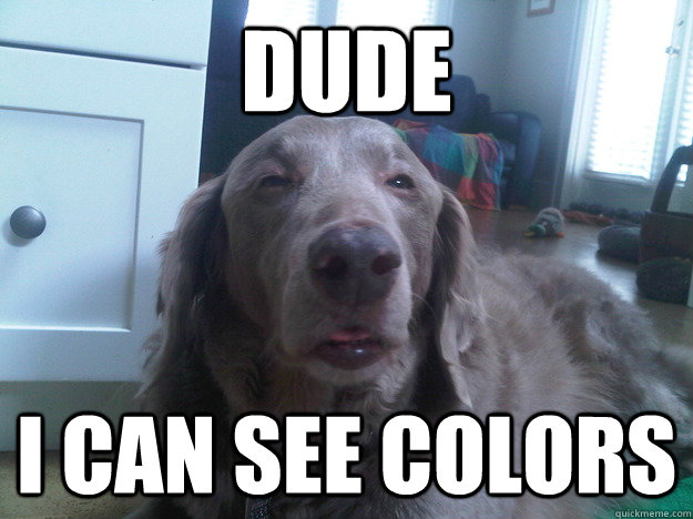 dude i can see colors - 10 Dog
