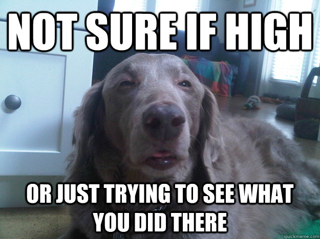 not sure if high or just trying to see what you did there - 10 Dog