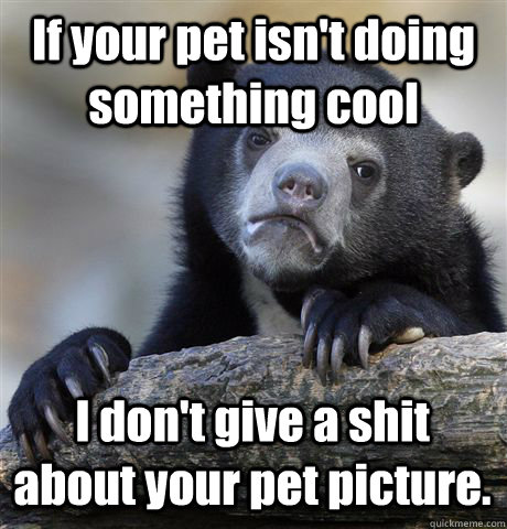 if your pet isnt doing something cool i dont give a shit a - Confession Bear