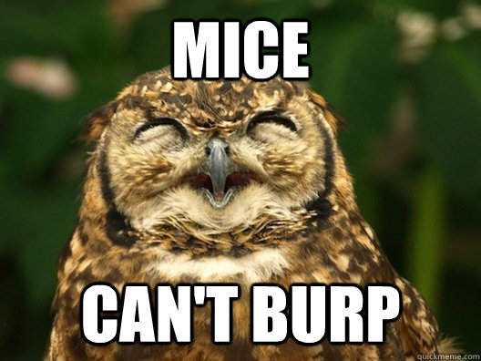 mice cant burp - Useless Fact Owl