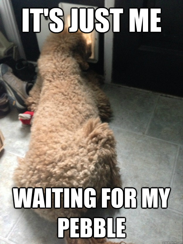 its just me waiting for my pebble - Expectation doggie