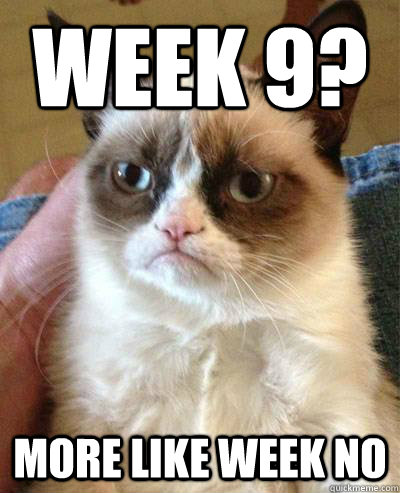 week 9 more like week no - Week 9 Angry Cat