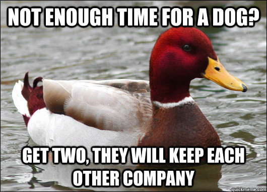 not enough time for a dog get two they will keep each othe - Malicious Advice Mallard