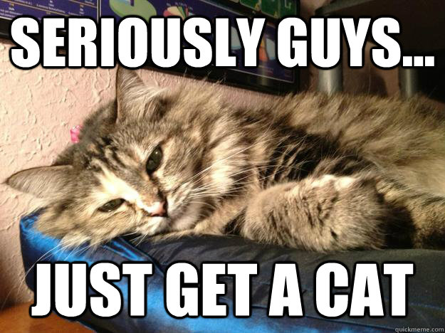 seriously guys just get a cat - 