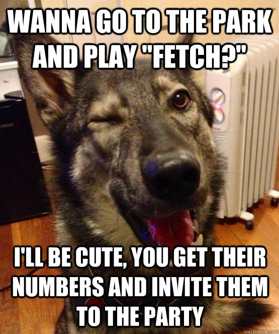 wanna go to the park and play fetch ill be cute you get - Pickup Pup