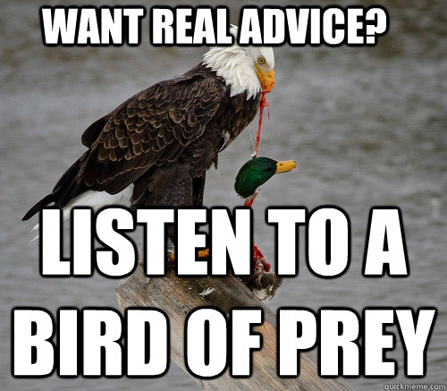 want real advice listen to a bird of prey - 