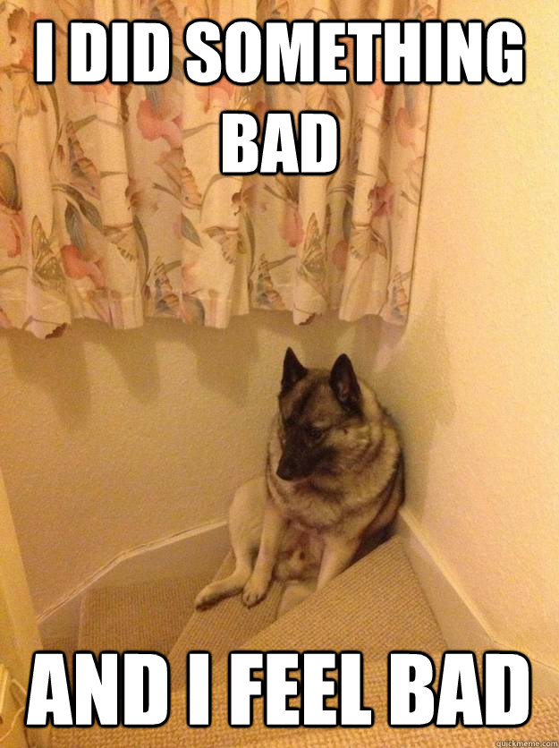 i did something bad and i feel bad - upset dog