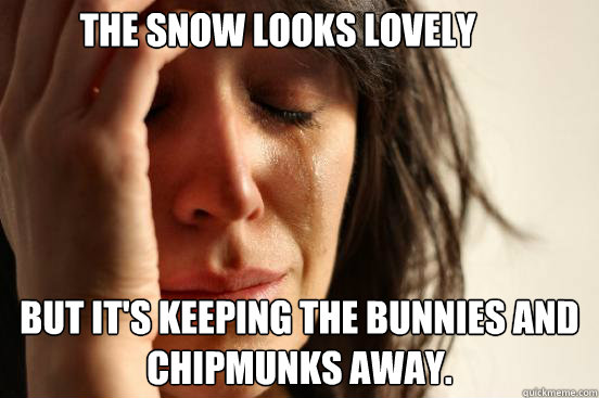 the snow looks lovely but its keeping the bunnies and chipm - First World Problems