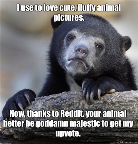 I use to love cute fluffy animal pictures Now thanks to Redd - Confession Bear