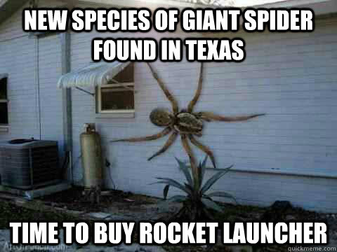 new species of giant spider found in texas time to buy rocke - giant spider