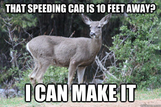that speeding car is 10 feet away i can make it - Daredevil Deer