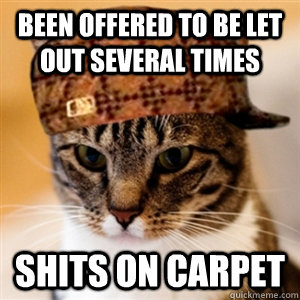 been offered to be let out several times shits on carpet - 