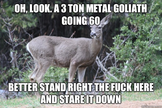 Oh look A 3 ton metal goliath going 60 Better stand right th - Daredevil Deer