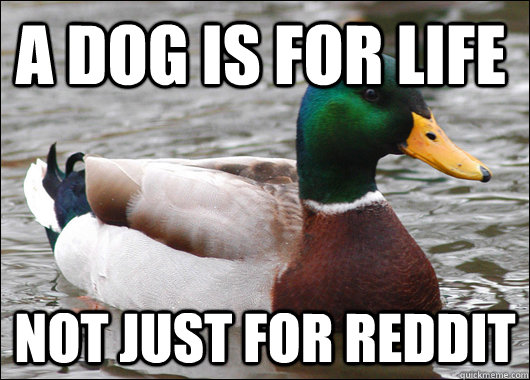 a dog is for life not just for reddit - Actual Advice Mallard