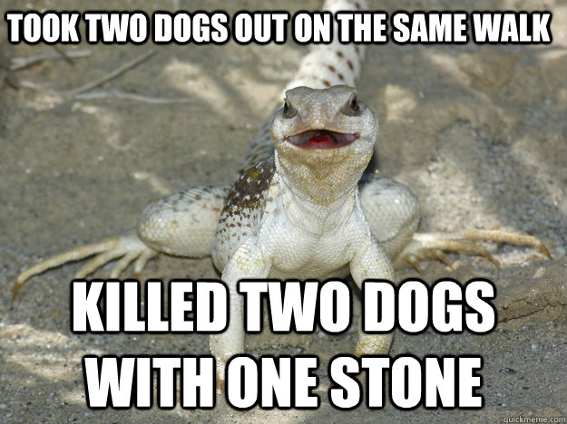 took two dogs out on the same walk killed two dogs with one  -