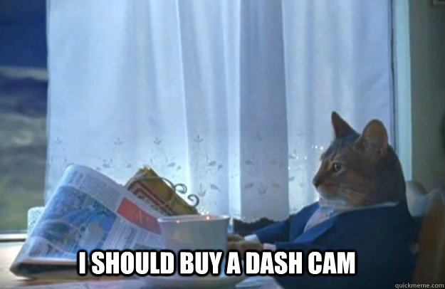 i should buy a dash cam - Sophisticated Cat