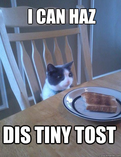 i can haz dis tiny tost - Breakfast Cat