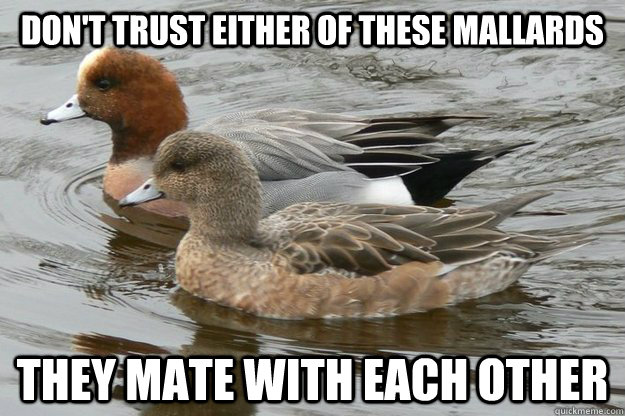 dont trust either of these mallards they mate with each oth - Actual Advice Mallards