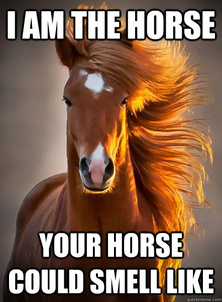 i am the horse your horse could smell like - Ridiculously photogenic horse