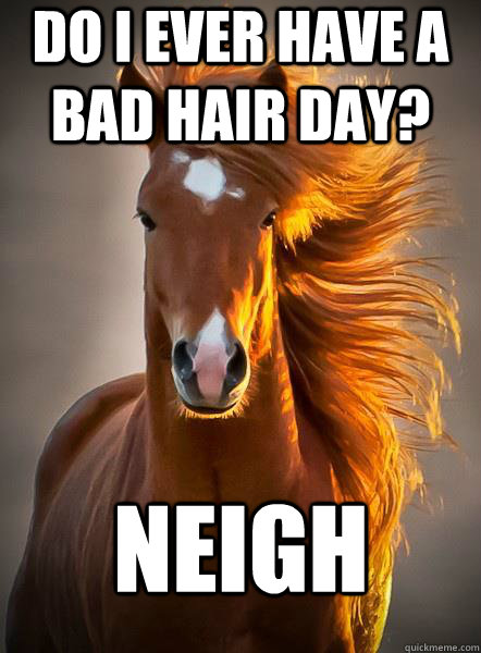 do i ever have a bad hair day neigh - Ridiculously Photogenic Horse
