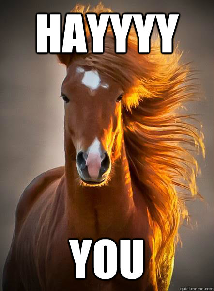 hayyyy you  - Ridiculously Photogenic Horse