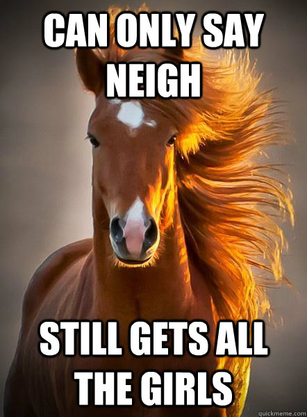 can only say neigh still gets all the girls - Ridiculously Photogenic Horse