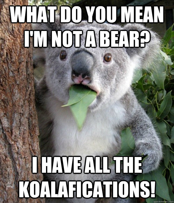 what do you mean im not a bear i have all the koalaficatio -