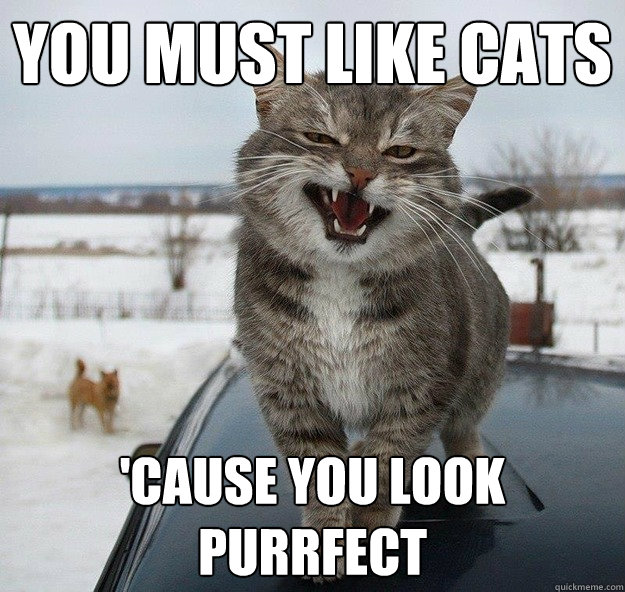 you must like cats cause you look purrfect -