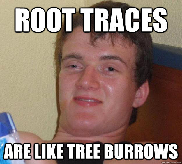 root traces are like tree burrows - 10 Guy