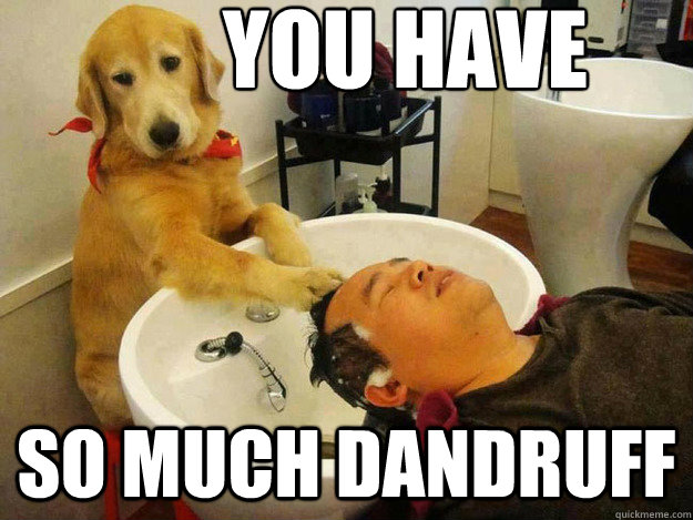 you have so much dandruff - Barber Dog