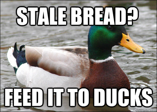 stale bread feed it to ducks - Actual Advice Mallard