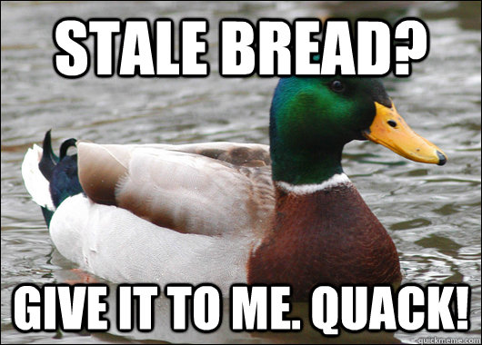 stale bread give it to me quack - Actual Advice Mallard