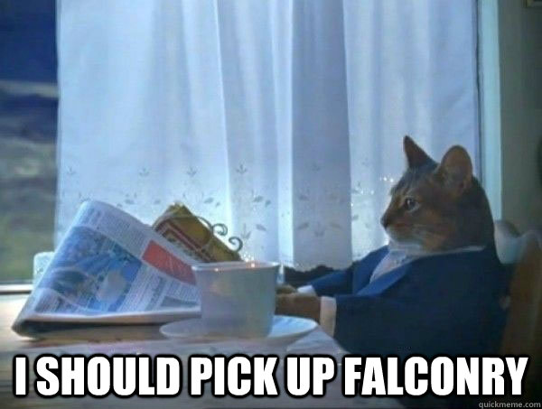 i should pick up falconry - morning realization newspaper cat meme