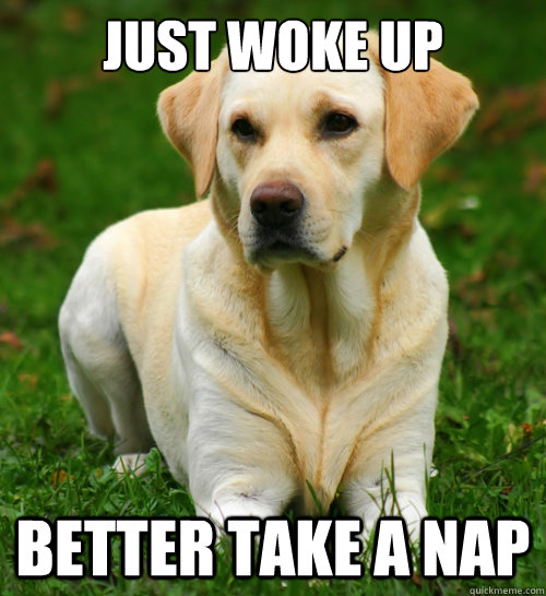 just woke up better take a nap - Dog Logic