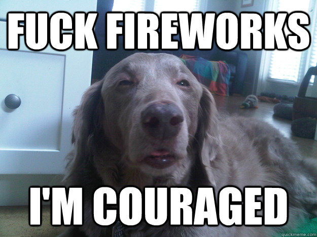 fuck fireworks im couraged - 10 Dog