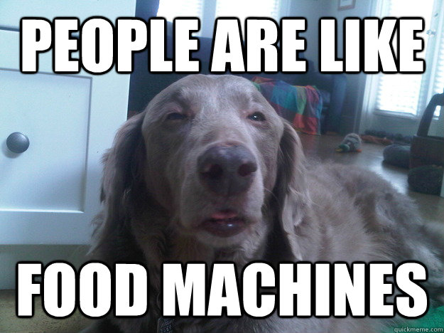 people are like food machines - 10 Dog