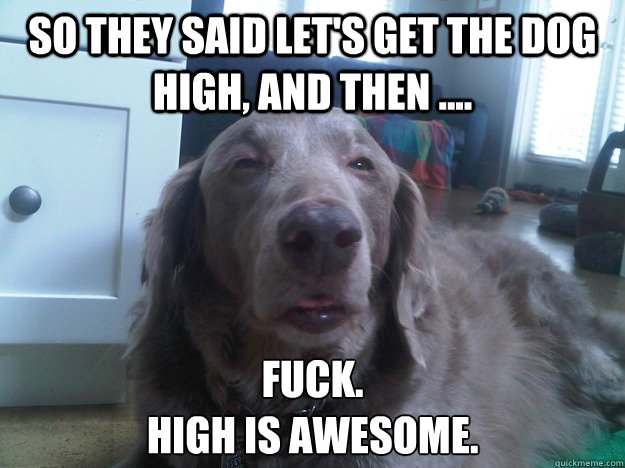 so they said lets get the dog high and then fuck hi - 10 Dog