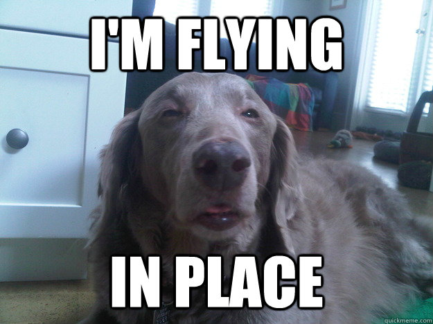 im flying in place - 10 Dog