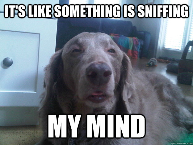its like something is sniffing my mind - 10 Dog