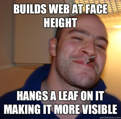 Builds web at face height Hangs a leaf on it making it more  - GoodGuyGreg