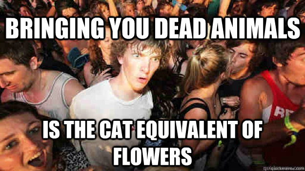 bringing you dead animals is the cat equivalent of flowers - Sudden Clarity Clarence